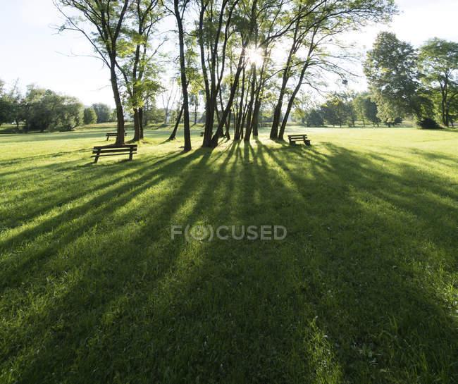 Сонцем промені крізь дерева в зеленому парку — стокове фото