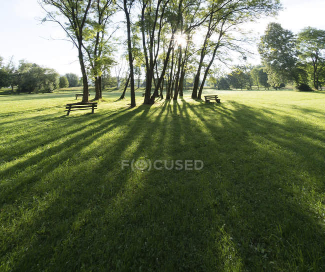 Sunshine rays through trees in green park. — Stock Photo