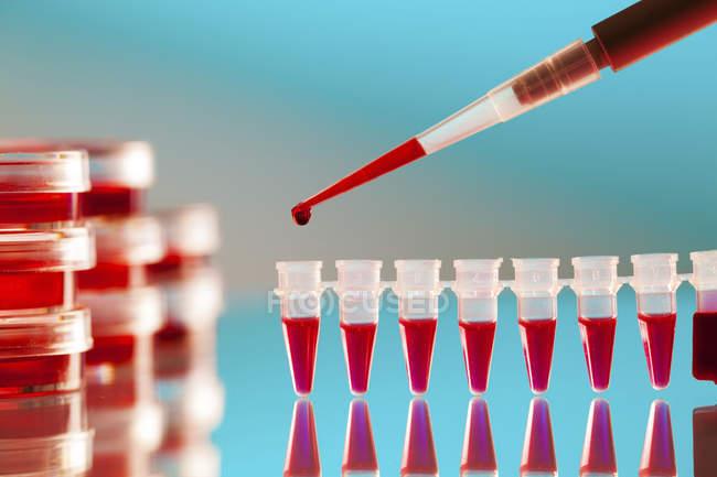 Nahaufnahme von Mikropipetten, die Blutprobe in Mikrozentrifugenröhrchen pipettieren. — Stockfoto