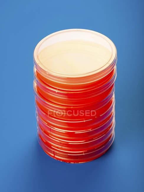 Petri con agar sangre sobre fondo azul. - foto de stock