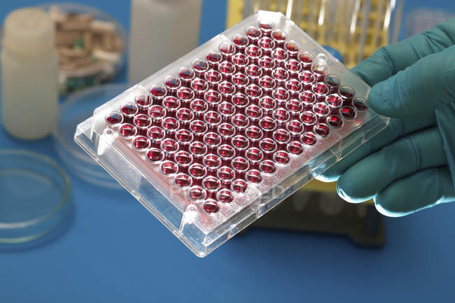 Multiwell plate with biological samples in scientist hand. — Stock Photo
