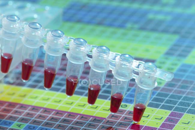 Gros plan des tubes de microcentrifugation avec des échantillons de sang . — Photo de stock