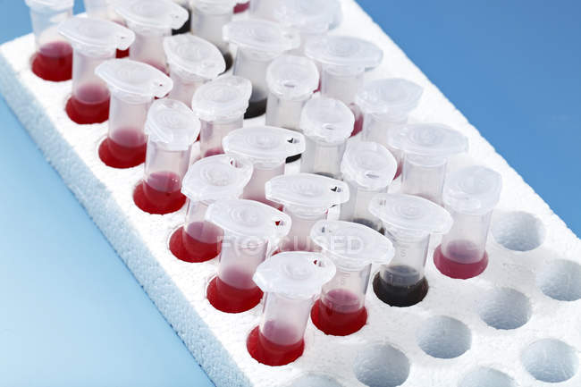 Microcentrifuge sample tubes in styrofoam rack on blue background. — Stock Photo