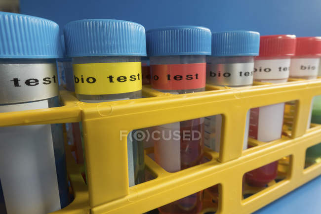 Tubes for biological test in rack on blue background. — Stock Photo