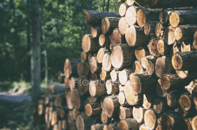 Wooden logs with forest  in background. — Stock Photo