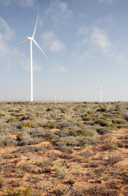 Turbines at wind farm near Vredendal, Western Cape, South Africa. — Stock Photo