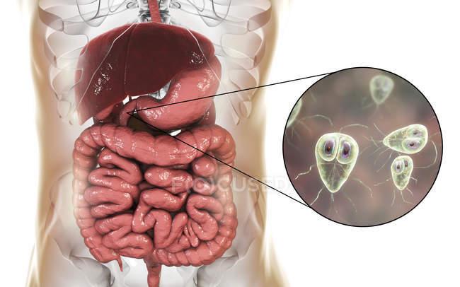 Giardia Lamblia einzellige Protozoen Parasiten im menschlichen Zwölffingerdarm, digitalen Kunstwerke. — Stockfoto