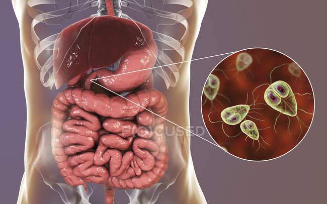 Giardia lamblia parasites protozoaires unicellulaires dans le duodénum humain, illustration numérique . — Photo de stock