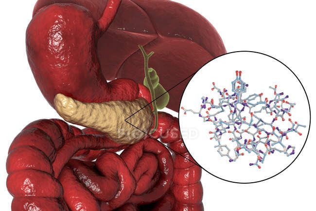 Human digestive system with highlighted pancreas and molecular model of insulin. — Stock Photo
