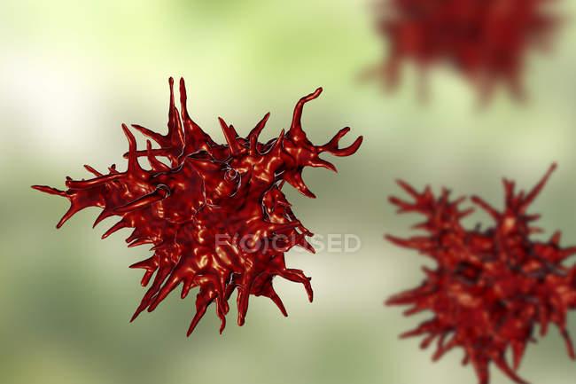 Ilustración digital de las amebas de Acanthamoeba castellanii . - foto de stock