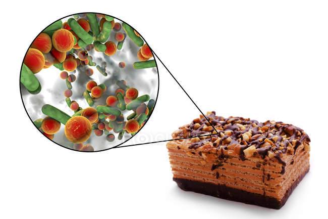 Ilustración conceptual del trozo de pastel y aumento de las bacterias de la infección transmitida por los alimentos sobre fondo blanco . - foto de stock