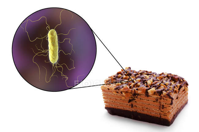 Conceptual illustration of piece of cake and magnification of bacterium of food-borne infection on white background. — Stock Photo