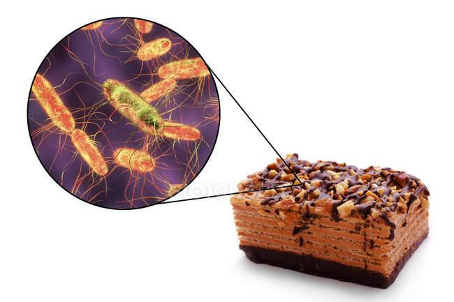 Piece of cake and microscopic image of Salmonella bacteria, conceptual illustration. — Stock Photo