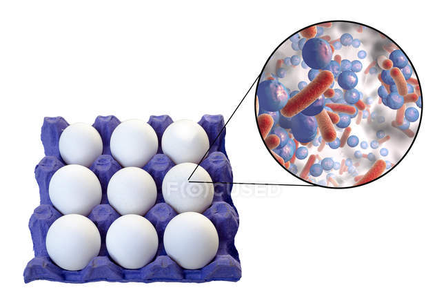 Conceptual illustration of chicken eggs in carton and magnification of bacteria of food-borne infection on white background. — Stock Photo