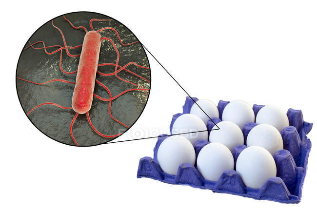 Conceptual illustration of chicken eggs in carton and magnification of bacterium of food-borne infection on white background. — Stock Photo