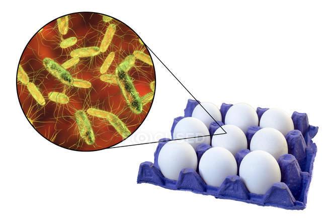 Œufs de poulet et image microscopique de la bactérie Salmonella causant la salmonellose . — Photo de stock