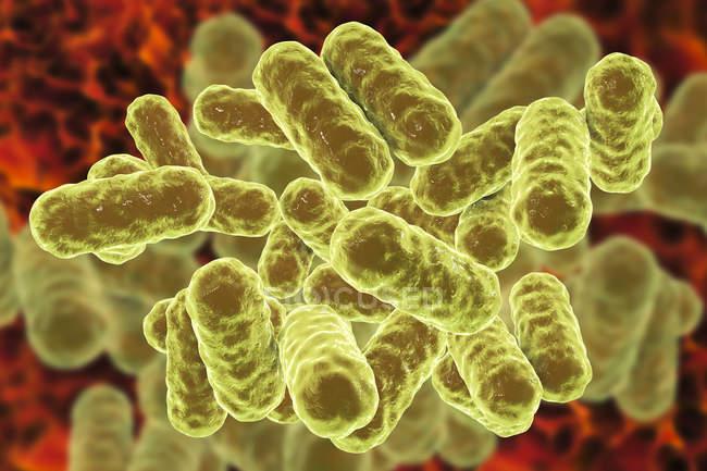 Digitale Illustration von Enterobacter gram-negativen Bazillen. — Stockfoto