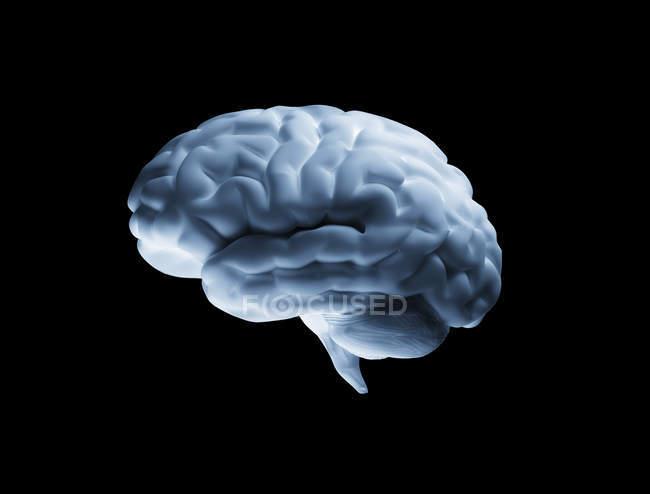 Cerebro humano blanco sobre fondo negro, obra de arte digital . - foto de stock