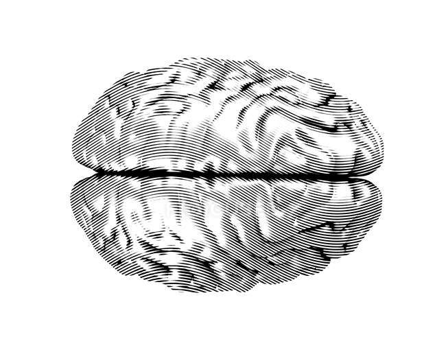 Grey textured human brain on white background, digital illustration. — Stock Photo