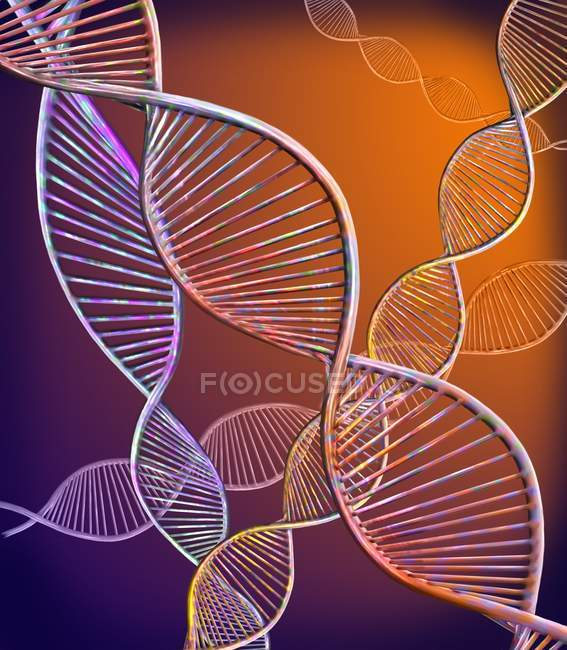 Digital illustration showing structure of double stranded DNA molecules. — Stock Photo
