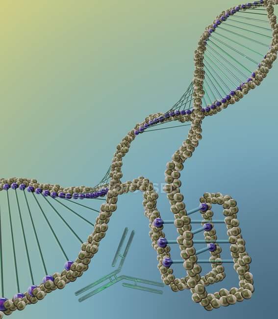Estructura de ADN con motivo intercalado, ilustración digital . - foto de stock