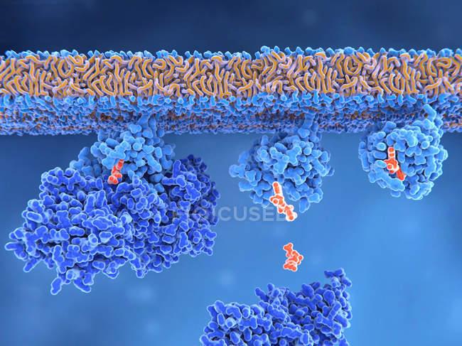 Attivazione di proteine ras, illustrazione digitale . — Foto stock