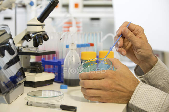 Male hands taking sample from agar plate for microbiology research. — Stock Photo