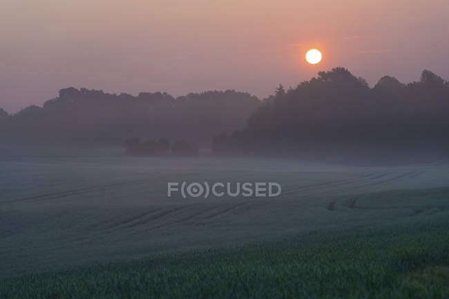 Misty rural hilly landscape with forest at sunrise. — Stock Photo