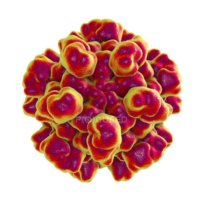 Partículas rojas del virus de la hepatitis E con capa de proteína . - foto de stock