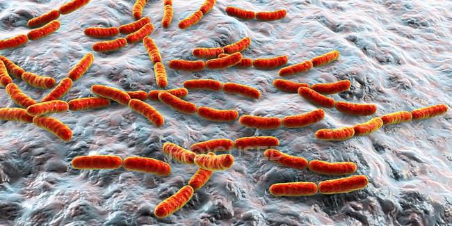 Batteri colorati Lactobacillus del microbioma dell'intestino tenue umano, illustrazione . — Foto stock