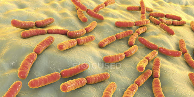 Batteri colorati Lactobacillus del microbioma dell'intestino tenue umano, illustrazione . — Foto stock