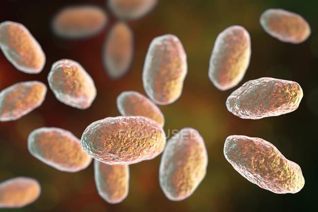 Œuvre d'art numérique de la bactérie Yersinia enterocolitica en forme de tige colorée . — Photo de stock