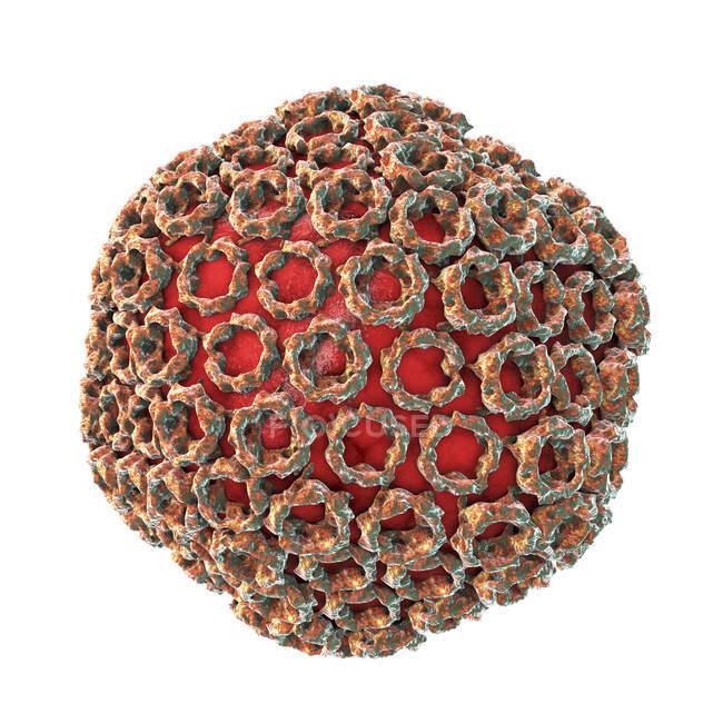 Partícula del virus de la fiebre del Valle del Rift sobre fondo blanco, ilustración digital . - foto de stock