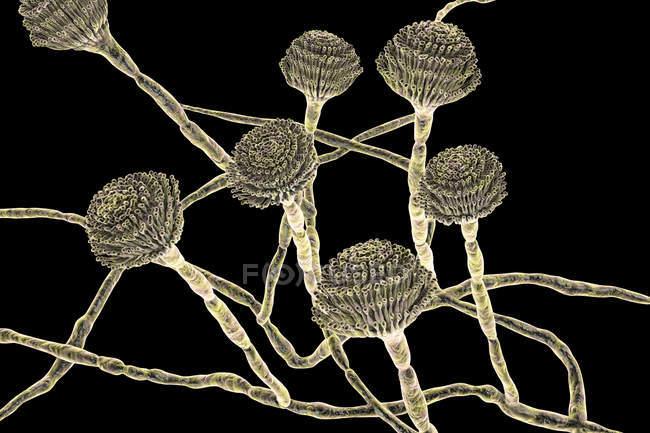 Digital illustration of fruiting bodies and hyphae of fungus Aspergillus fumigatus. — Stock Photo
