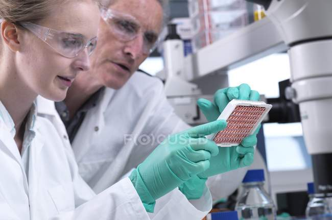Scientists preparing multiwell plate with blood samples for testing and analysis. — Stock Photo