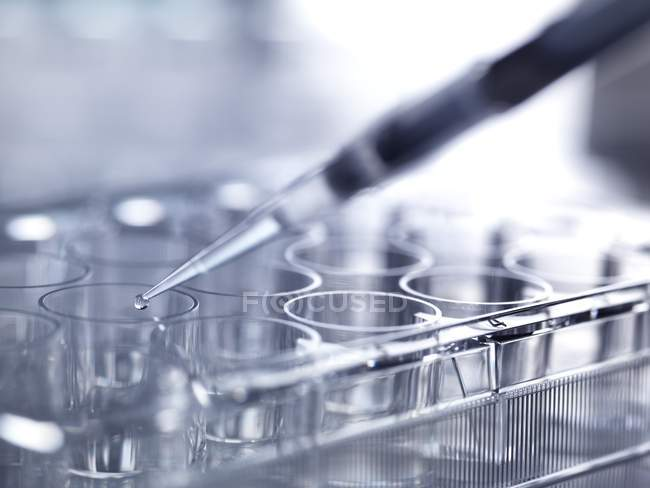 Close-up of pipetting sample into multiwell plate for analysis in laboratory. — Stock Photo