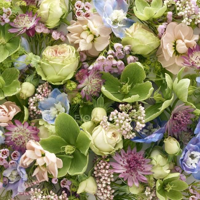 Flores da Primavera em forma quadrada, estúdio tiro. — Fotografia de Stock