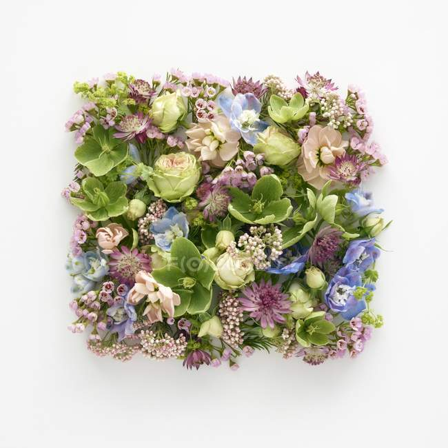 Spring flowers in square shape, studio shot. — Stock Photo