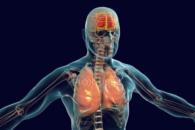 Gehirn und Lungen in menschlicher Silhouette, digitale Illustration. — Stockfoto