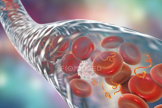 Ebola virus particles in blood, digital illustration. — Stock Photo