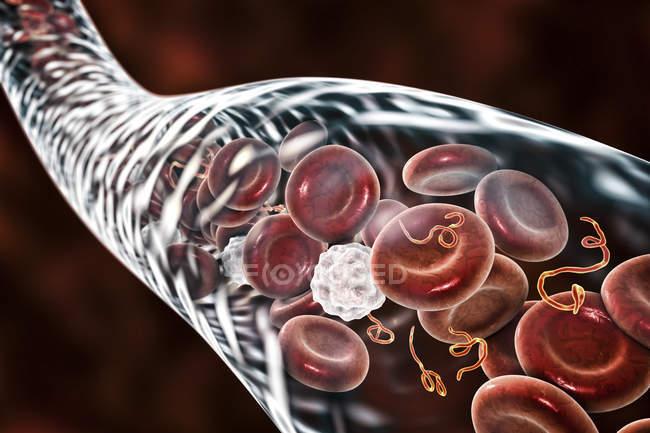 Particules du virus Ebola dans le sang, illustration numérique . — Photo de stock