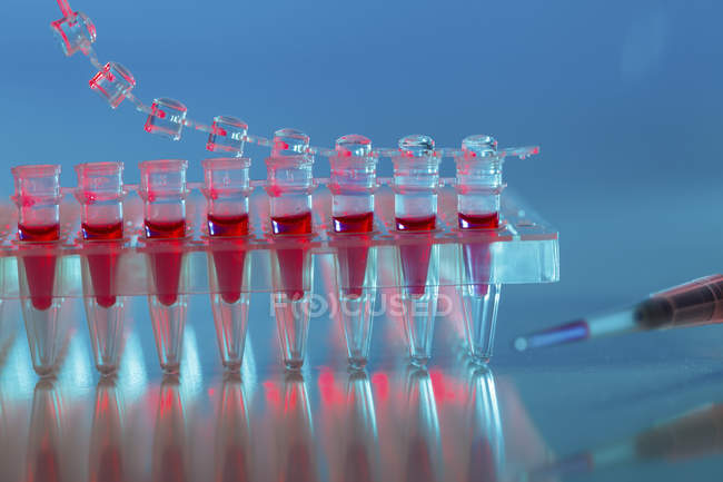 Blood samples in PCR tubes. — Stock Photo