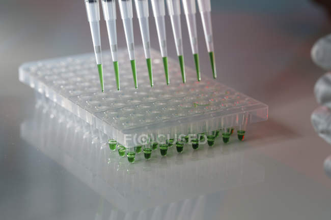 Close-up of multichannel pipette with green liquid on multiwell plate in laboratory. — Stock Photo