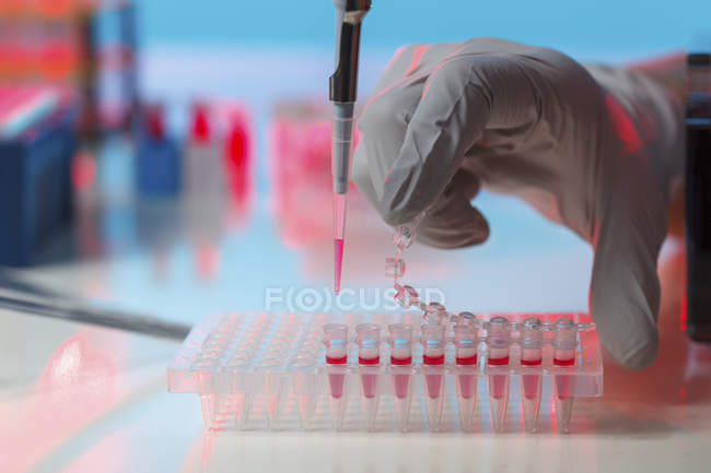 Scientist hand pipetting samples into microcentrifuge tubes. — Stock Photo