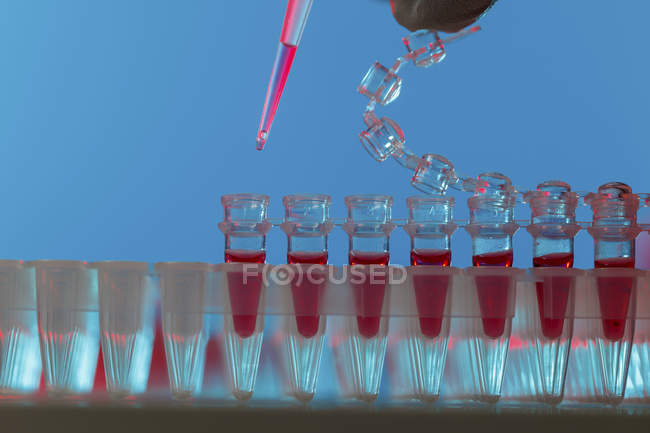 Close-up of pipetting sample into microcentrifuge tubes. — Stock Photo