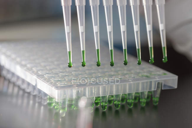 Close-up of multichannel pipette with green liquid pipetting into multiwell plate in laboratory. — Stock Photo