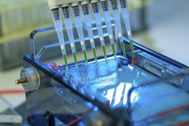 Pipetage machines d'échantillons pour l'électrophorèse sur gel. — Photo de stock