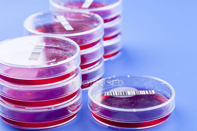 Close-up of bar-coded agar plates for biological research. — Stock Photo