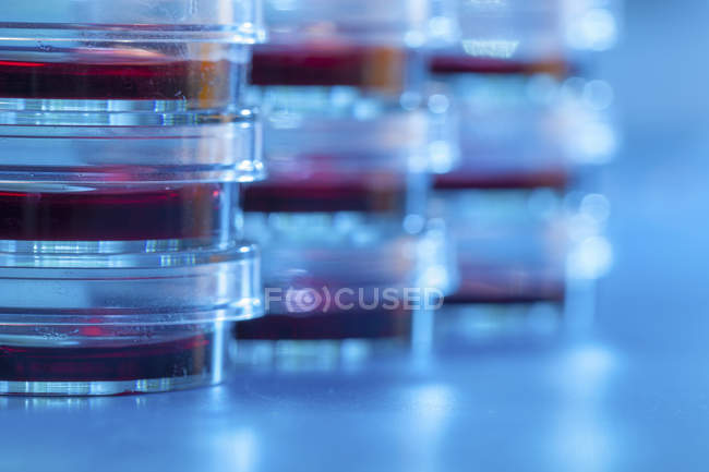 Close-up of stacked Petri dishes with agar for microbiology research. — Stock Photo