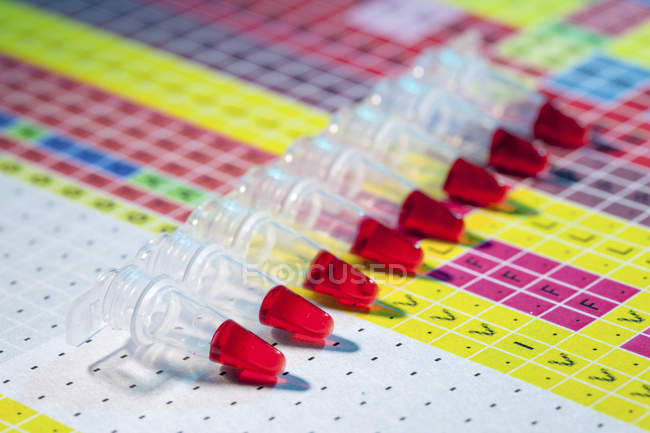 Blood samples in microcentrifuge tube strip for genetic analysis. — Stock Photo